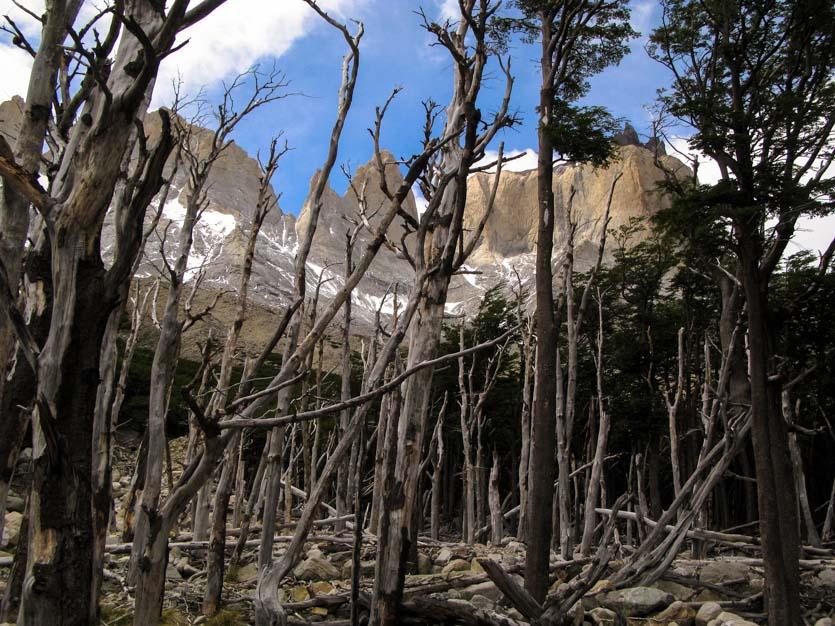 Patagonia-031